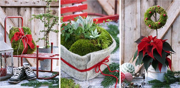 Julblommor kransar mossa träffas plantera