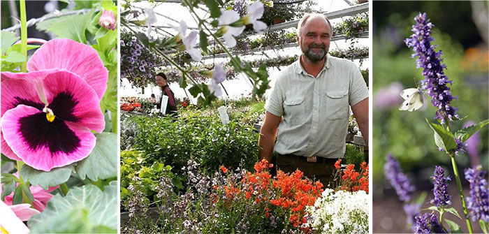 Sommarblommor egen odling Lundens Vaxthus