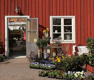 Butik Lundens Växthus blommor