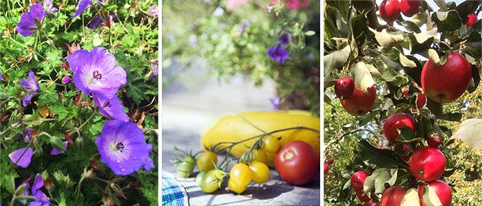 Sommarblommor gronsaksplantor frukttrad